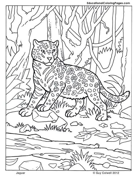 coloring pages of jaguar baby jaguar coloring pages coloring home