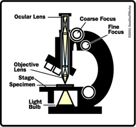 the basics how light microscopes work howstuffworks