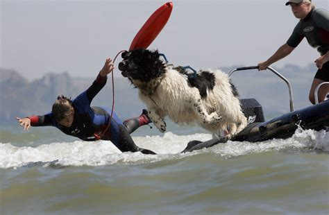 real rescue they called him david hasslewoof meet the rescue who saved the lives of nine