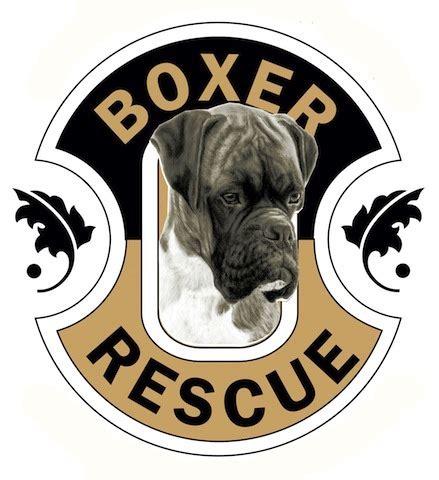 louisiana rescue boxer rescue la boxerrescuela