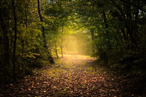 wallpaper autumn mystic forest path foliage