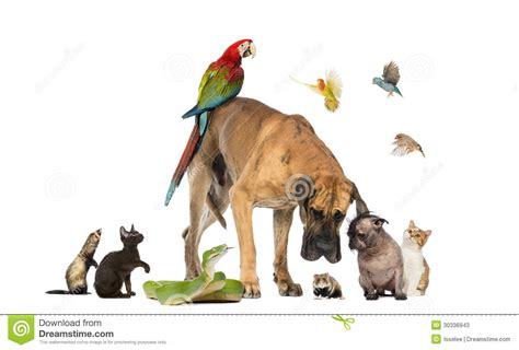 fotos animales juntos grupo de animales dom 233 sticos junto