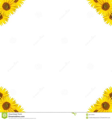 sunflower border design royalty  stock  image