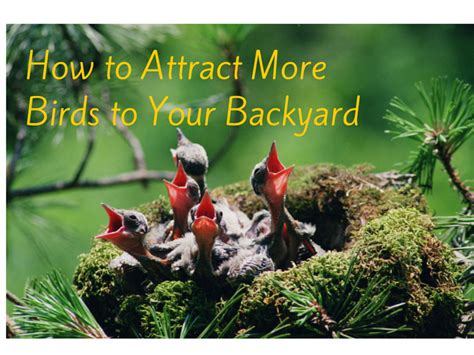 how to attract wildlife to your backyard 5 ways you can attract more birds to your backyard