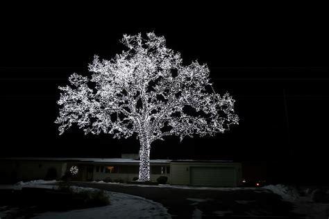 minnesota christmas tree photograph by amanda stadther