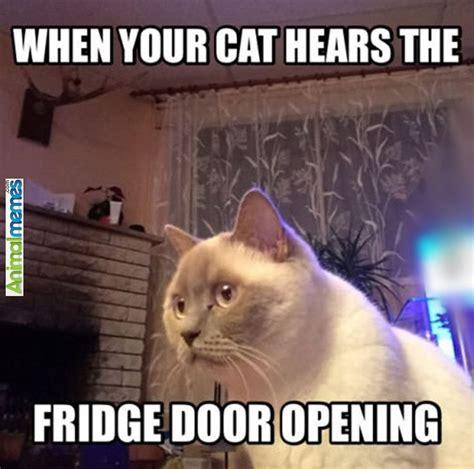 Cat Alien Meme - 919 best images about cat memes on pinterest aliens