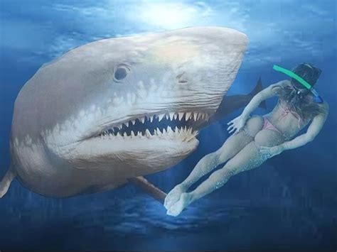 imagenes reales de un megalodon tiburon megalodon real monstruos marinos gigantes youtube