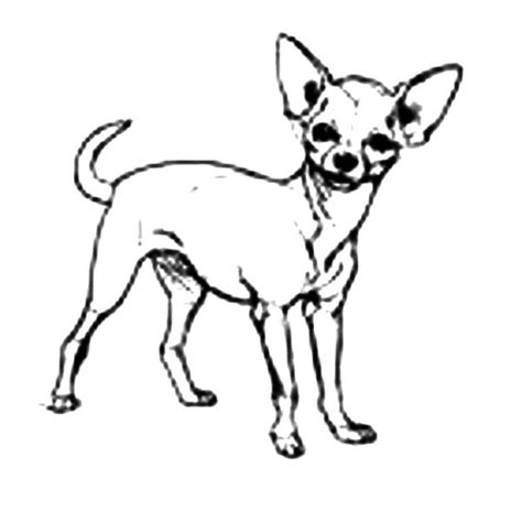 cute chihuahua coloring pages digging a hole coloring coloring pages