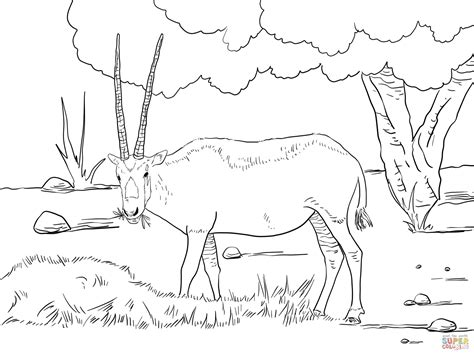 Arabian Oryx Drawing Arabian Coloring Pages