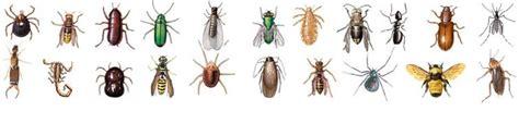 insetti volanti disinfestazione euromac s r l facility e global