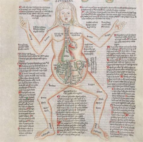 Female Anatomy Medical Miscellany Wellcome Apocalypse