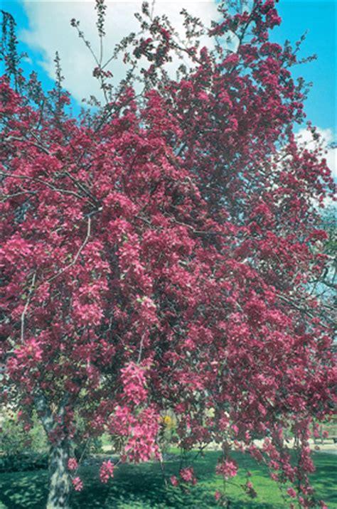 alberi da fiore giardini