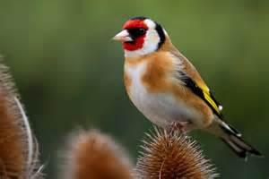 vogel garten ein garten f 252 r v 246 gel gartenzauber