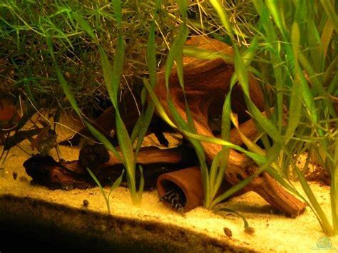 aquarium umzug firma aquarium lexterpower 160l