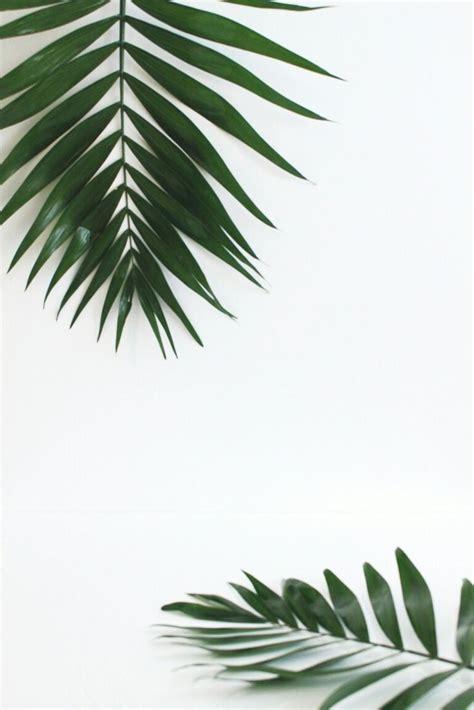 green wallpaper pinterest birambi x costestravel costesfashion both pinterest
