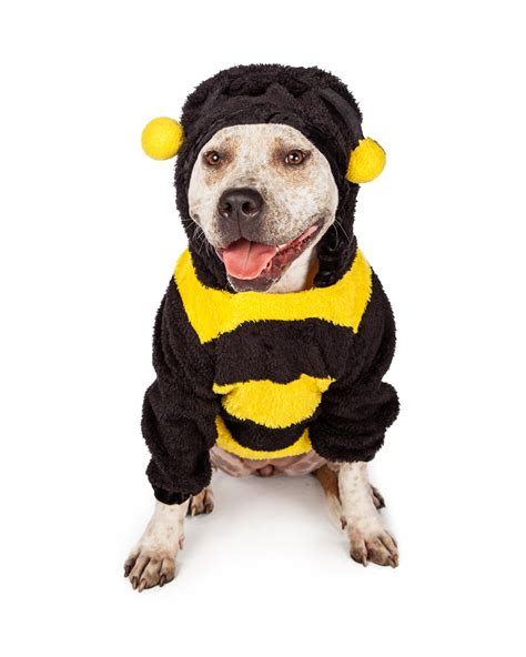 Halloween Costume Giveaway - pit bull in halloween bumble bee costume olsen s