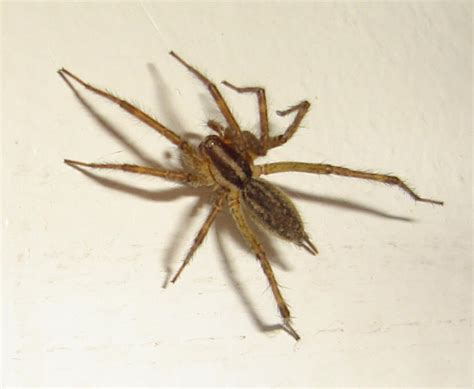 Garden Spider In Pa Spiders At Spiderzrule The Best Site In The World About