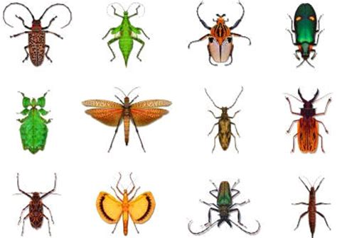 imagenes animales artropodos zoolog 205 a invertebrados insectos 1 170 parte