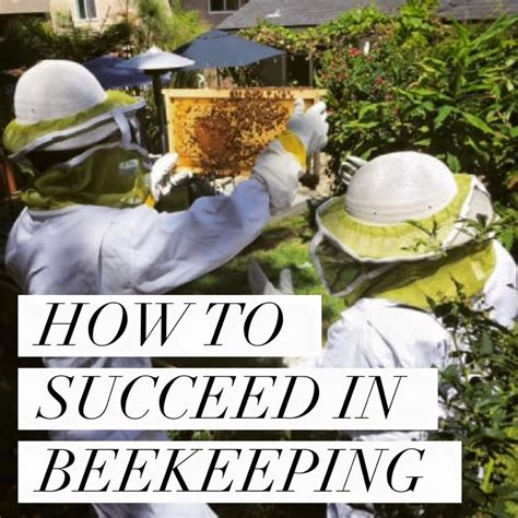how to a beehive in your backyard bed and breakfasts