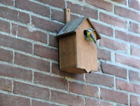 Beleuchtung Mauerwerk by Kostenlose Foto Vogel Holz Haus Fenster Dach Mauer