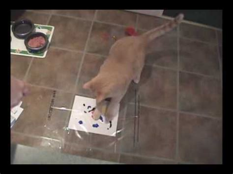 cat painting kit cats painting artwork with casso paint kit