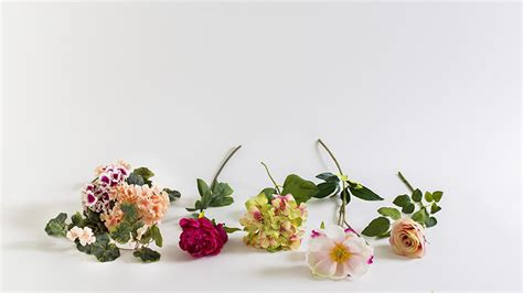 imagenes flores secas flores secas flores secas para decorar el interior