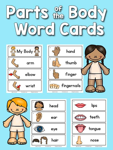 card for kindergarten parts picture word cards kindergarten bodies and cards