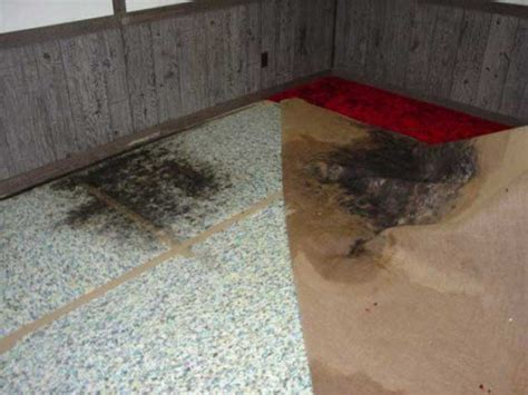 mold on bathroom floor how do i clean mold on vinyl flooring