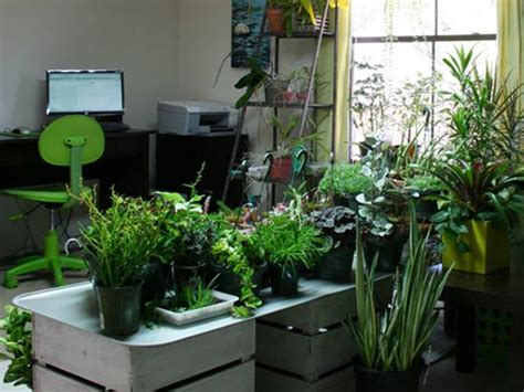tips to make small indoor garden for home 4 home ideas tips to make small indoor garden for home 4 home ideas