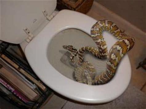 testa nel cesso serpente nel cesso dago fotogallery