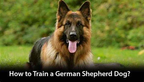 how to house break a dog how to train a german shepherd dog hours tv