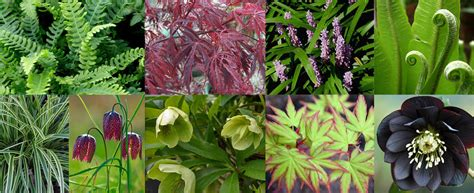 colourful plant combinations for shady areascolourful