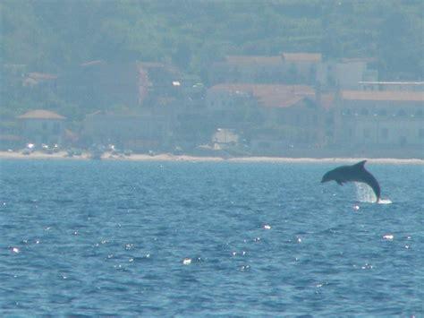 popolare mezzogiorno tropea squali e delfini avvistati nelle acque di messina e tropea