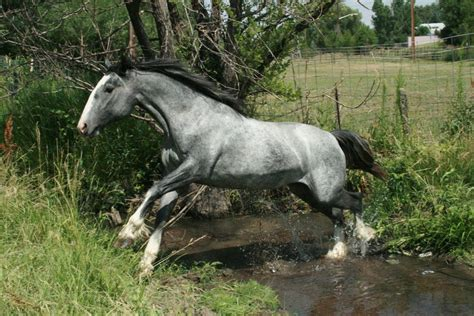 silver stallion mustang ok blue roan stock 60 by tragedyseen on deviantart