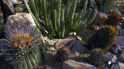 Botanical Gardens Tucson Tucson Botanical Gardens In Tucson Arizona Expedia