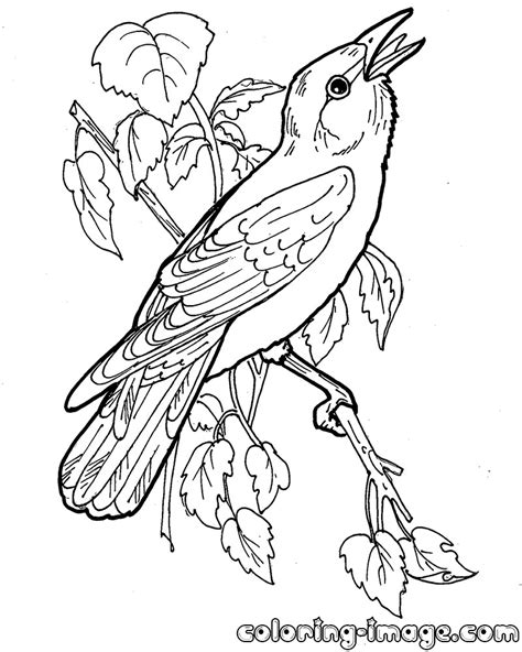 orioles coloring pages coloring pages
