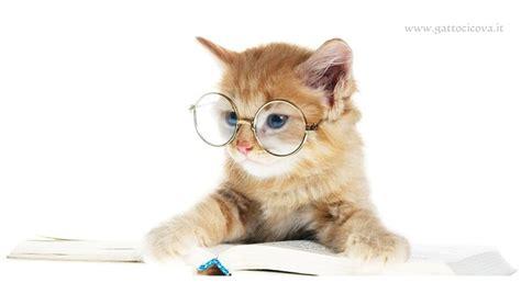 alimentazione gatto anziano il gatto anziano la bellezza della terza et 224 felina
