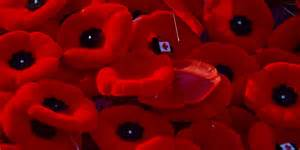 what to do with your poppy after nov 11