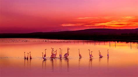 Flamingo Sunset flamingos in the sunset at wallpaper wallpaper