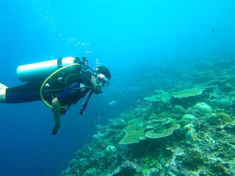 dive vacation scuba diving philippines and the pleasures of tropical