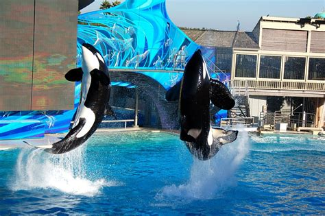 World S Whale Retailer Ends All Whale - seaworld is to end killer whale shows lifegate