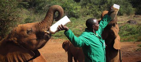 david kalama s photographic safari in east africa kenya and tanzania volume 1 books the ultimate wildlife photographic safari