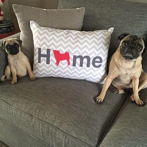 how fast can a pug run 1000 ideas about pug puppies on pugs pug puppies and pugs