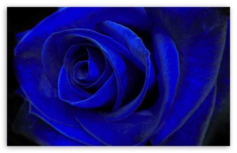 blue velvet wallpaper blue velvet 4k hd desktop wallpaper for 4k ultra hd tv