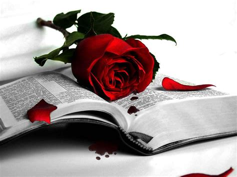the roses books and book wallpaper high resolution jp 12310