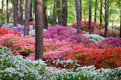 Callaway Gardens by Pine Mountain Official Tourism Travel Website