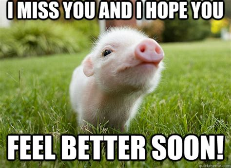 Funny Feel Better Meme - i miss you and i hope you feel better soon baby pig
