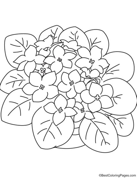 purple violet flower coloring page purple flowers coloring pages coloring pages