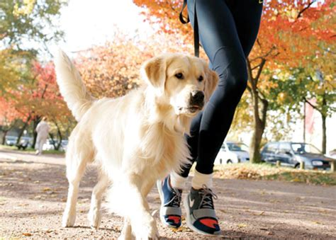 how far can dogs run days running with your pup s running
