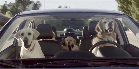 subaru commercial dogs subaru tested caign business insider